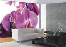 Fototapete Tapete Große Orchidee Blume Blüte Foto 360 cm x 254 cm