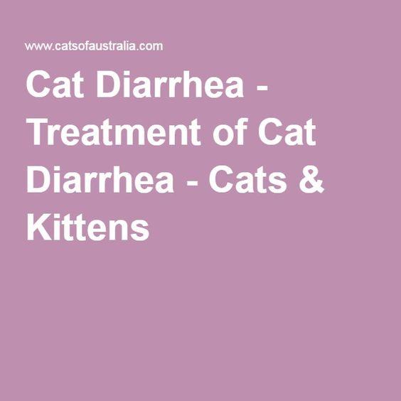 rare kitten breeds