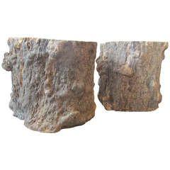 American Black Walnut Tree Trunk Table Bases