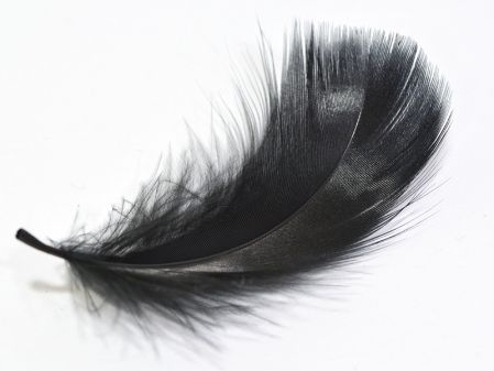 Pinterest le catalogue d 39 id es - Plume noire signification ...