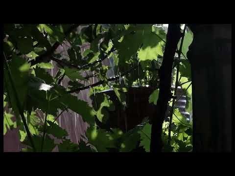 Pelicula El Triangulo De Las Bermudas Completa En Español Youtube Paco De Lucía Take Five Video Editor