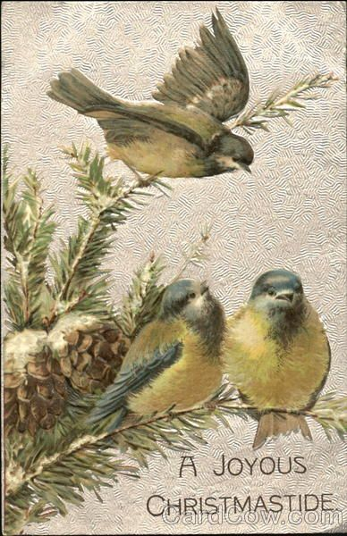 ♥ - Love Birds.  Wake up every morning as the Doves call to one another.