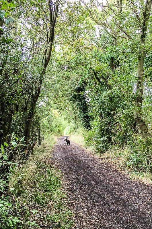 Essex Walks Where To Take The Best Country Walk In Essex Essex Walks Country Walk Cool Places To Visit