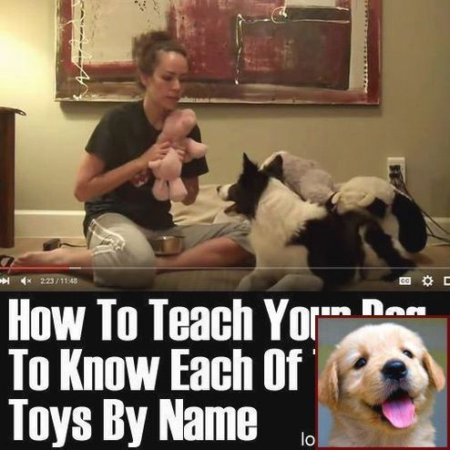 Dog Behavior Nibbling And Clicker Training Deaf Dogs Dog