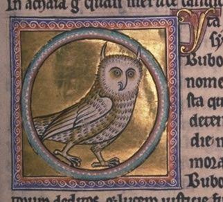 An owl from the Aberdeen Bestiary: