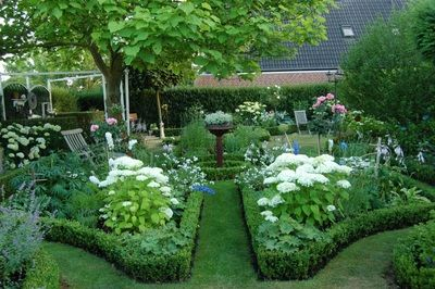 hortensie annabell hostas buchseinfassung hortensien pinterest. Black Bedroom Furniture Sets. Home Design Ideas