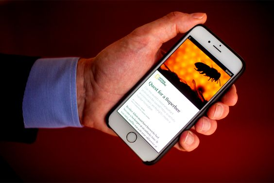Agora é oficial – NYTimes, BuzzFeed passam a publicar diretamente no Facebook - Blue Bus