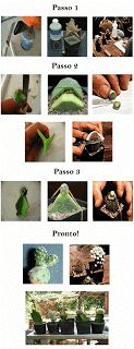 Beleza de Cactos|Cactaceos|Cactus|Melhor blog cactos|Cuidar Cactos|Paisagismo Cactos|Cultivar: Enxerto Cactos