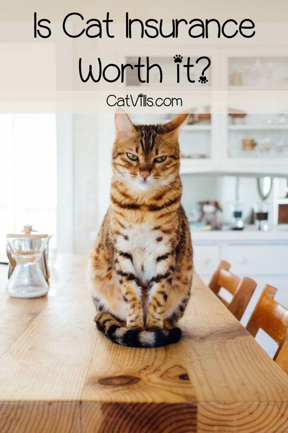 Is Cat Insurance Worth It Cat Insurance Pet Health Pet Health