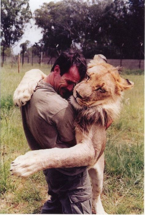 This is the man who bought this lion as a cub in the 60s, and then when it got too big, he let it into the wild. 10 years later, it was like the alpha male in a nature reserve in Africa and was really violent. The guy went to see it, and it walked up to him and gave him a hug. Wow