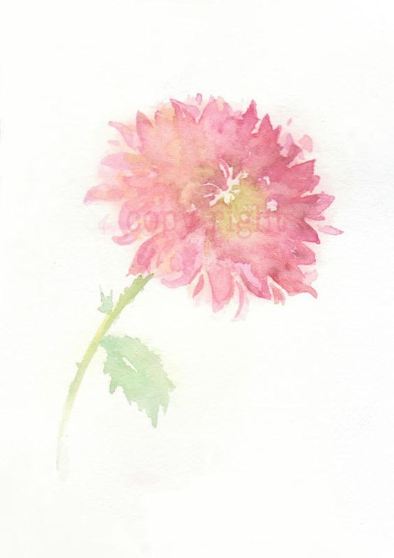 Chrysanthemums, Watercolors and Flower art on Pinterest