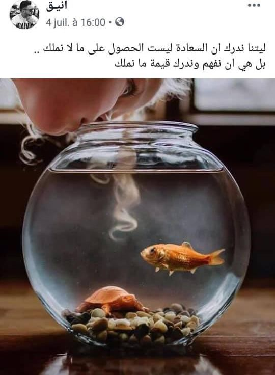 كلمات وحكم Arabic Quotes Beautiful Arabic Words Proverbs Quotes