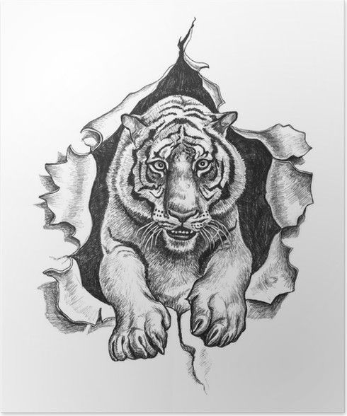 Resultado De Imagen Para Dibujos De Tigres De Bengala Acostadopara
