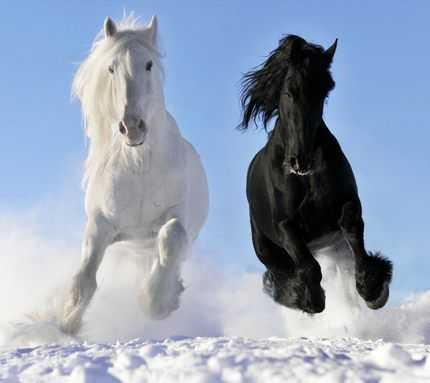 Black and white horse picture - photo#5
