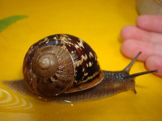 Autour des escargots...