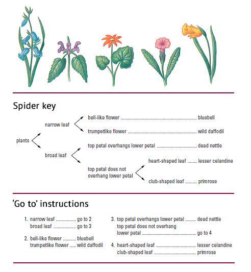 5 2 Applications And Skills 5 2 3 Recognising Plant Phyla And Making Dichotomous Keys Dichotomous Key Daffodils Planting Worksheet Template Dichotomous key worksheet