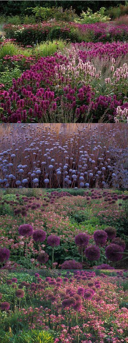 Piet oudolf grasses ispiration pinterest gardens for Piet oudolf plant list
