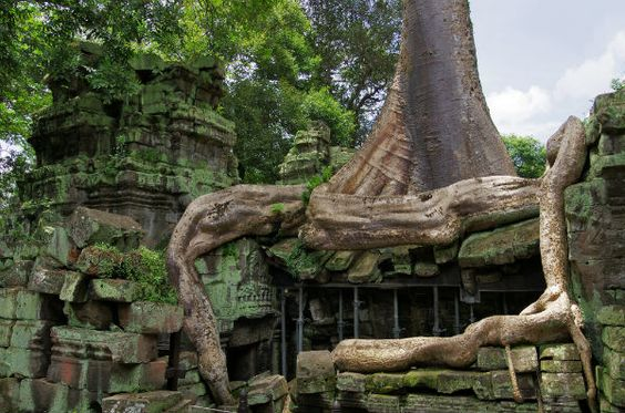 Những rễ cây hung hãn dường như muốn nuốt trọn tất cả nhưng những bức phù điêu vẫn được nguyên vẹn cho đến nay