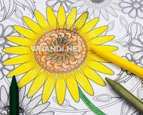 Kumpulan Gambar Mewarnai Bunga Matahari Terbaru Gambar Bunga Gambar Bunga
