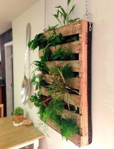 palette en bois avec des plantes