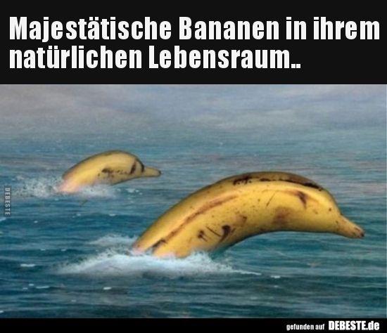 Die warum krumm ist witz banane Banane 😀