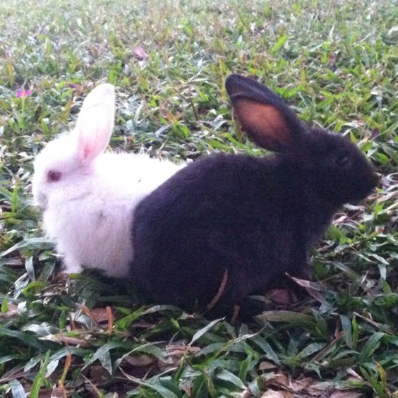 Rabbits! Just in time for Easter too!