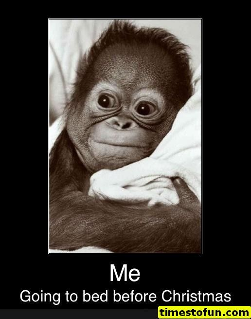 Funny Memes 60 Pictures Funnymemes Funnypictures Humor Funnytexts Funnyquotes Funnyanimals Funny Lol H Cute Animals Cute Baby Animals Baby Orangutan