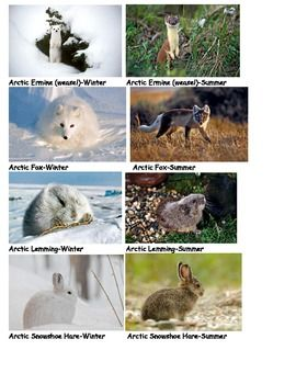 arctic adaptations nunavut at 15