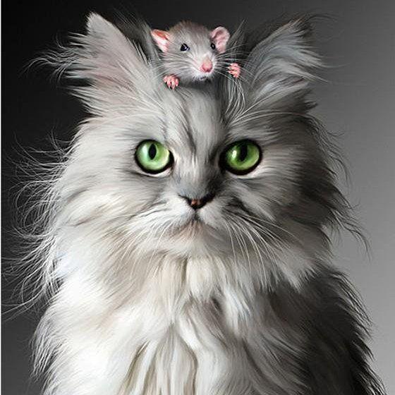 cat &mouse