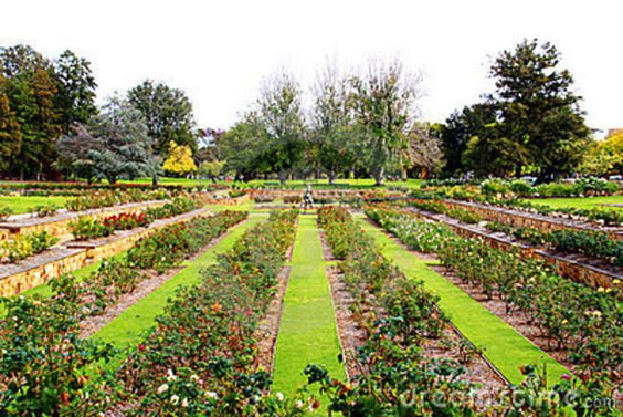 Formal rose garden - Adelaide, Australia