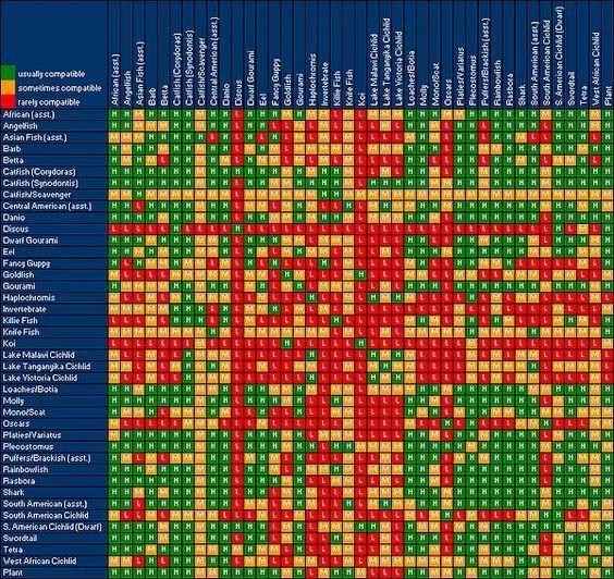 Tropical Fish Compatibility Chart All Aquarium Info Where To Buy And Aquatic Articles Compatibilitychart In 2020 Freshwater Fish Compatibility Chart Tropical Fish