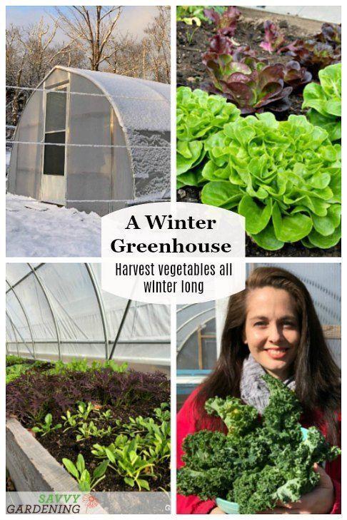 d903ba28dade2e96889232f82a4b18ae - How Do Gardeners Make Money In Winter