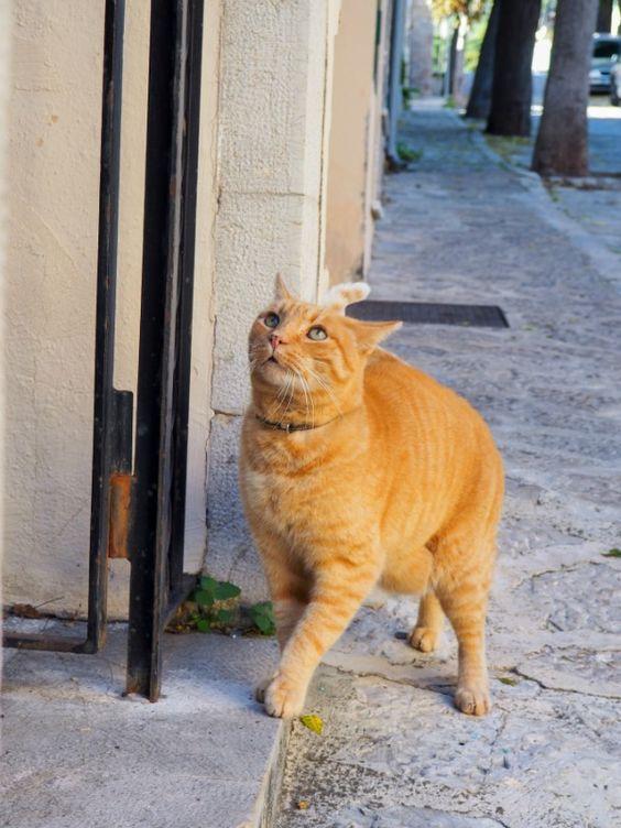 Cats From Valldemossa Mallorca Tabby Cat Orange Tabby Cats Cats