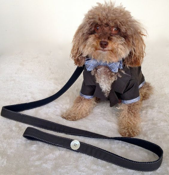 Our friend does amazing work! Academy Award Clothes suit upcycled into by DowntownDogClothing, $420.00