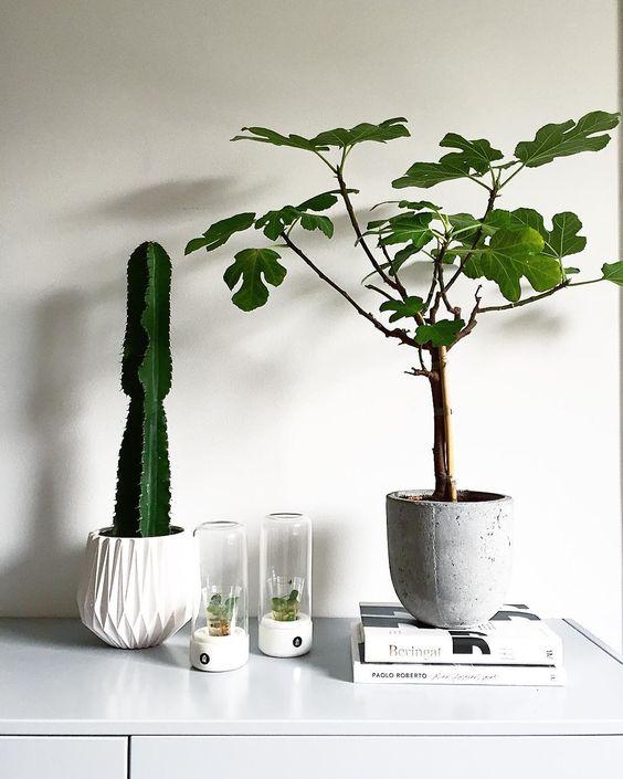 Nya kompisar på vår skänk.  #kaktus #fikonträd #stilleben #interiorbym #tendesignnorway #detaljen_ #homeinterior4you #min42a #plazainteriör #ssevjen #designfabriken #rebeqqa by erinterior