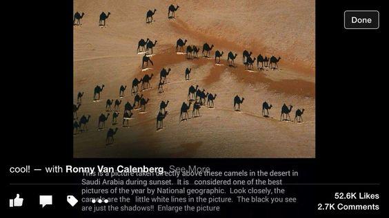 Camels best photo