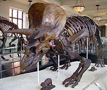 Dinosaurier – Wikipedia                                                       …