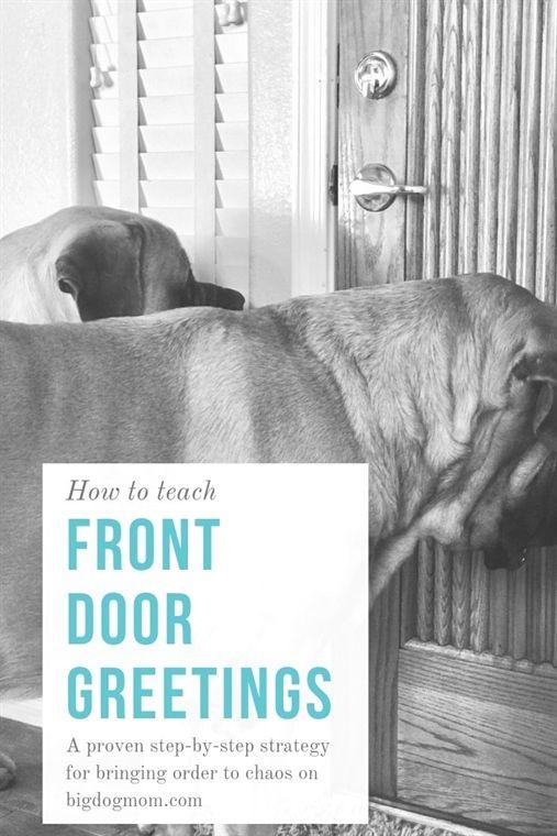 Dog Training Equitment Dog Training Rochester Ny Dog Training