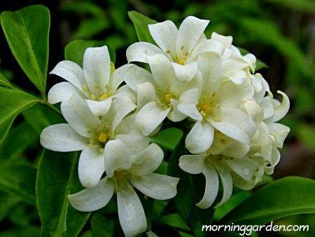 http://3.bp.blogspot.com/-WWjv5enenK8/UjvPzTmV9BI/AAAAAAAAACQ/JN25zxYOpxE/s1600/biodiversity-104186-1.jpg