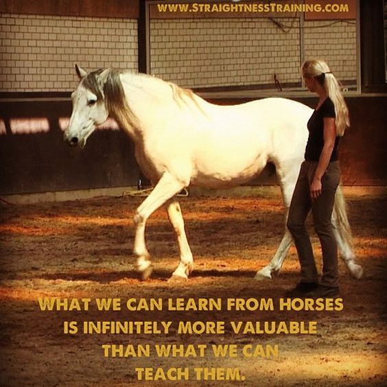 Let's start learning from life's best experts... the horses themselves!: