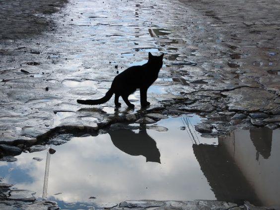 水面に映る猫