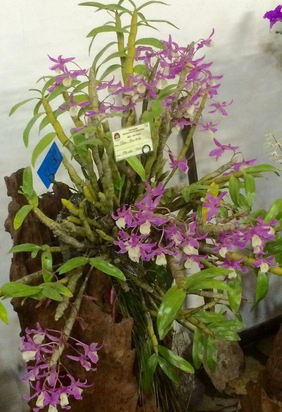 Exposição de Orquídeas 2016 - Embu das Artes - SP