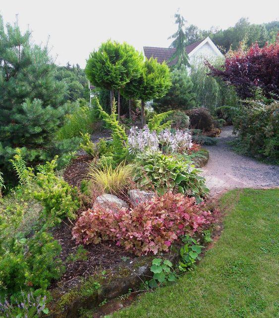 Hageliv og hagedesign  Planter til hagen  Pinterest