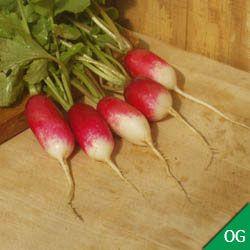Photo of Radish French Breakfast Organic, Radish