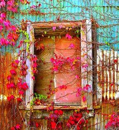 I love the way nature has reclaimed this window.
