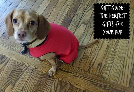 Gift Guide: The Perfect Gifts for Your Pup | Swa-Rai
