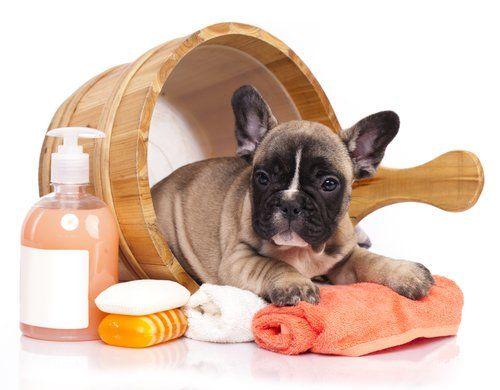 Dog Grooming Huge Free Guide For Beginners Bulldog Grooming Dog Grooming Dog Grooming Business