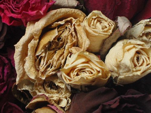 """Roses IV"", Helena Heinrihsone (2013)"