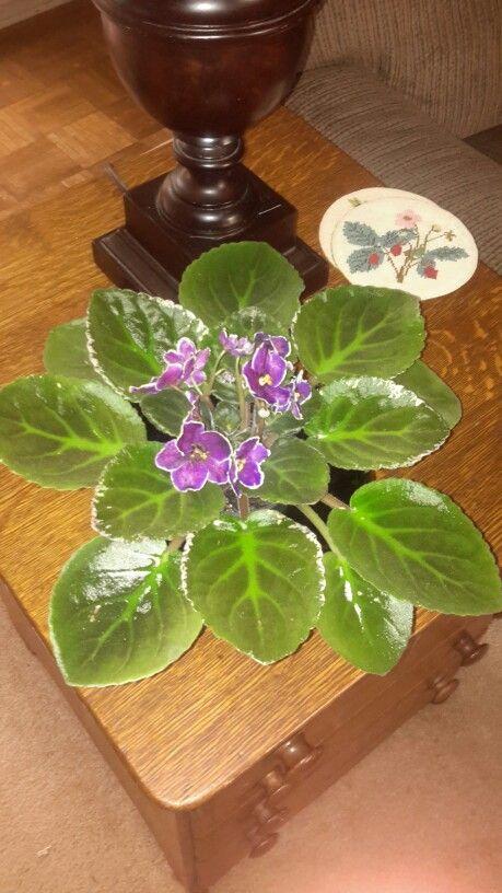 My NOID violet