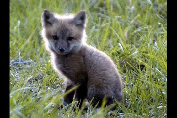 Foxy!! Adorable!!